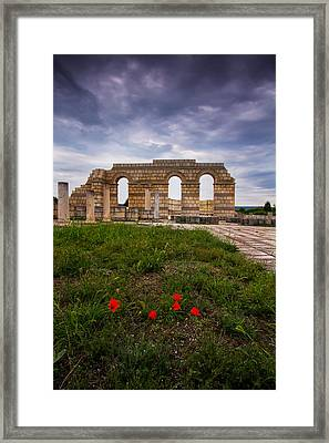 Poppies In The Ruins Framed Print
