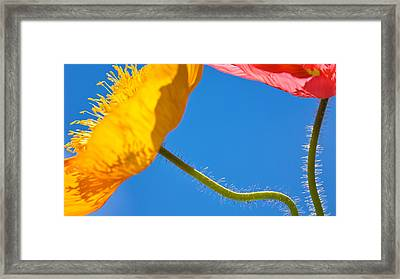 Poppies In The Sky Framed Print by Joan Herwig