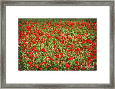 Poppies In Wheat Framed Print by Elena Elisseeva