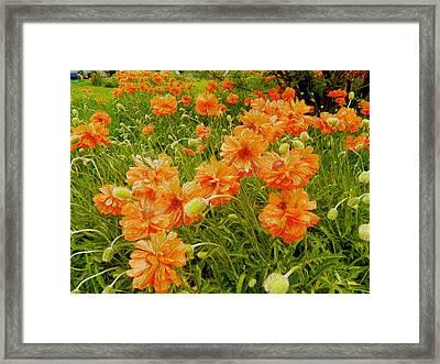 Poppies Jamestown Oil 2 Framed Print by Dee Meyer