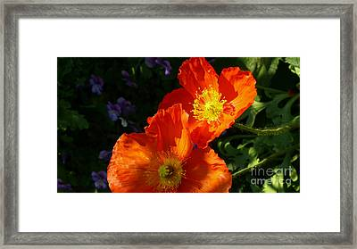 Poppies Framed Print by Jeanne  Woods