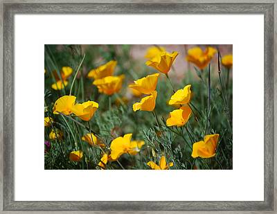 Framed Print featuring the photograph Poppies by Tam Ryan
