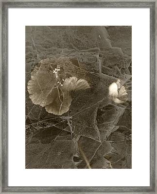 Poppies Under Ice Framed Print