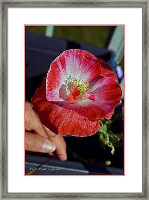 Popping Beauty Framed Print by Sonali Gangane