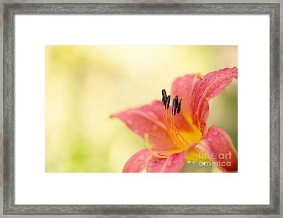 Popping Fresh Framed Print by Beve Brown-Clark Photography