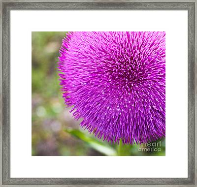 Popping Pink Framed Print