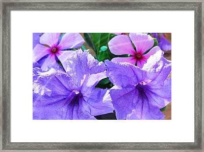 Popping Purple Petals Beauty Framed Print