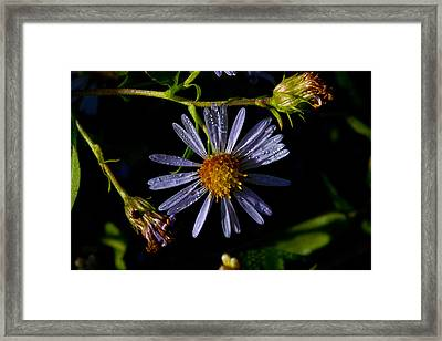 Popping With Purple Framed Print by Karol Livote
