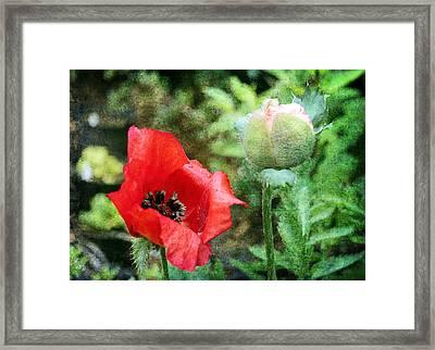 Framed Print featuring the digital art Poppy 1 by Helene U Taylor