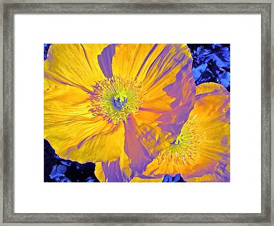 Poppy 14 Framed Print by Pamela Cooper