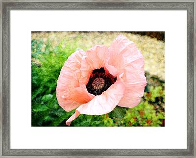 Framed Print featuring the digital art Poppy 2 by Helene U Taylor