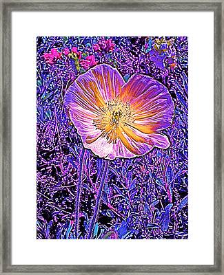 Poppy 3 Framed Print by Pamela Cooper