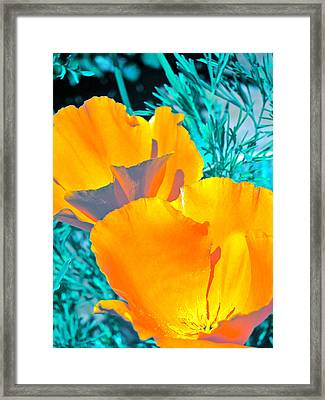 Poppy 4 Framed Print by Pamela Cooper