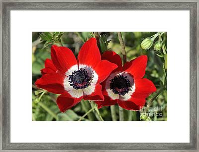 Poppy Anemones Framed Print by George Atsametakis