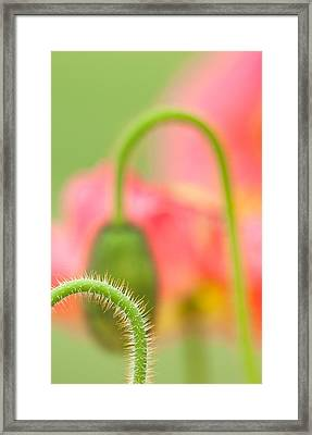 Poppy Arches Framed Print by Joan Herwig