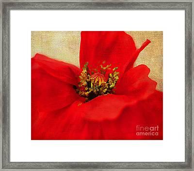 Poppy Art Framed Print by Darren Fisher
