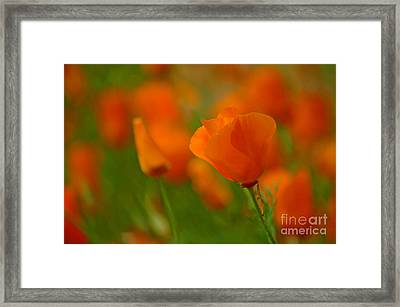 Framed Print featuring the photograph Poppy Art by Nick  Boren
