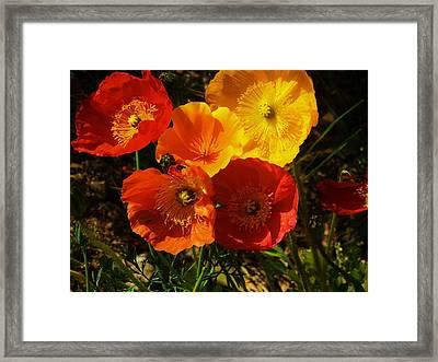 Poppy Bouquet Framed Print