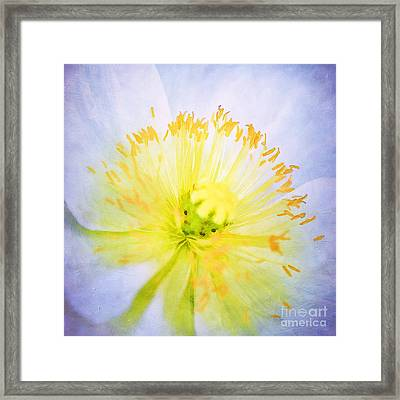 Poppy Close Up Framed Print by Darren Fisher