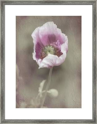Framed Print featuring the photograph Poppy by Elaine Teague