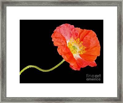 Poppy Framed Print by Elena Nosyreva