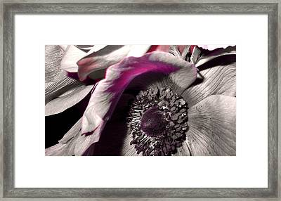 Poppy Eye Framed Print by Sharon Costa