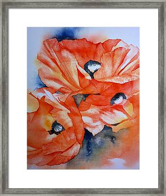 Poppy-faces Framed Print by Thomas Habermann