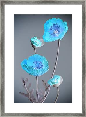 Poppy Family Framed Print