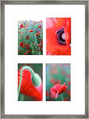 Poppy Field 1 Framed Print