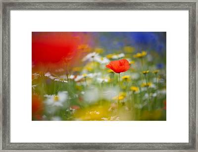 Poppy Field Fantasy Framed Print