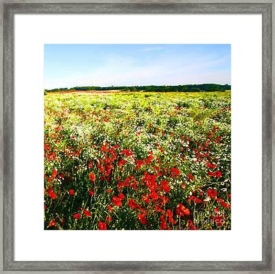 Poppy Field In Summer Framed Print by Craig B