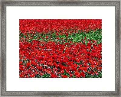 Poppy Field Framed Print by Jacqueline M Lewis