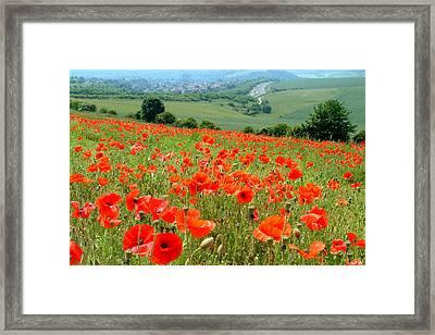 Poppy Field Framed Print by John Topman