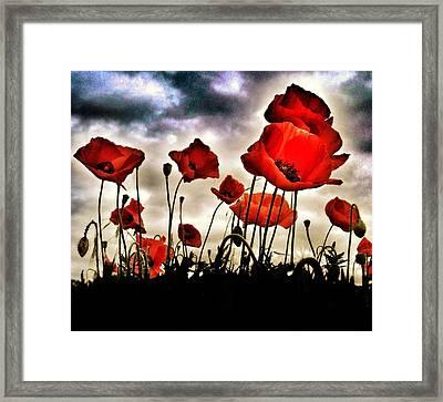 Poppy Field  Framed Print by Marianna Mills
