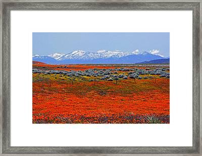 Poppy Fields Forever Framed Print by Lynn Bauer