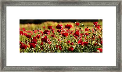 Framed Print featuring the photograph Poppy Fields Forever by Uri Baruch
