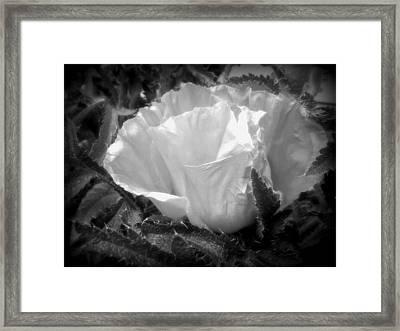 Poppy Flower 2 Framed Print by Heather L Wright