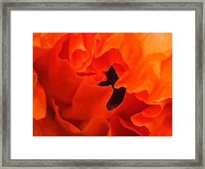Framed Print featuring the photograph Poppy by Gene Cyr