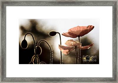 Poppy Generations Framed Print