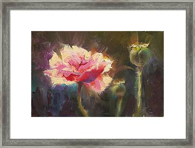 Poppy Glow Framed Print