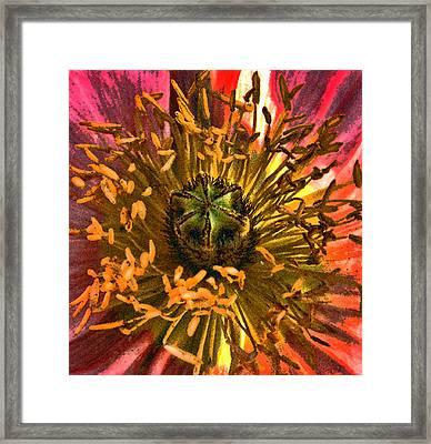 Poppy Heart Framed Print