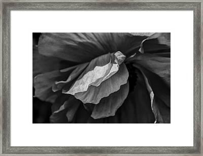 Poppy In Black And White May 2011 Framed Print by Joseph Duba