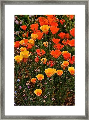 Poppy-luscious Framed Print