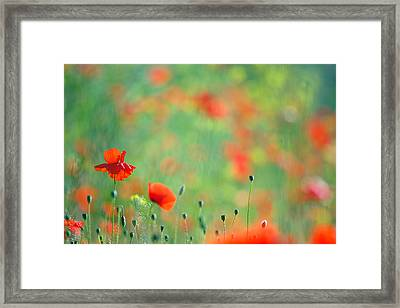Poppy Party - Field Of Corn Poppies Framed Print by Roeselien Raimond