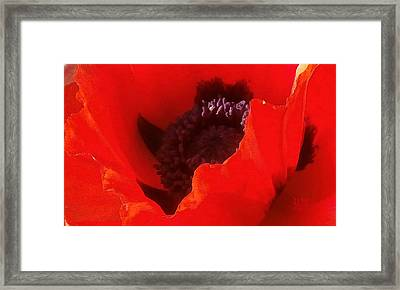 Poppy Passion Framed Print by J R Baldini Master Photographer