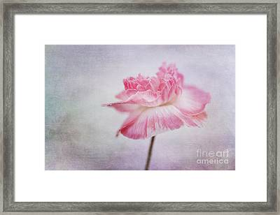 Poppy Poem Framed Print by Priska Wettstein