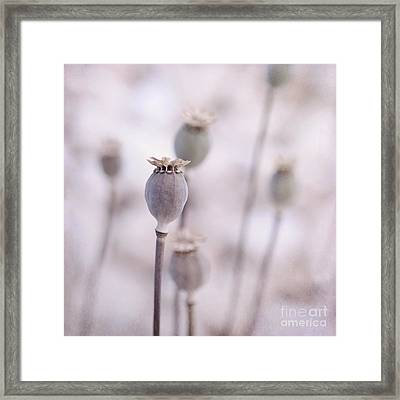 Poppy Queens Framed Print by Priska Wettstein