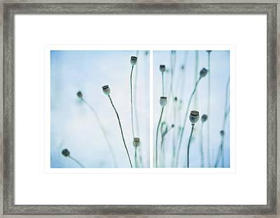 Poppy Seed Pods Framed Print by Theresa Tahara