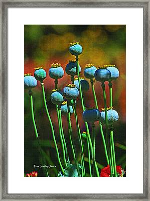 Poppy Seed Pods Framed Print