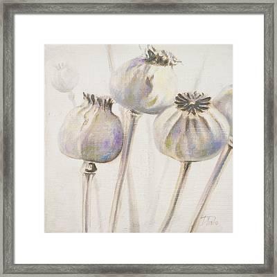Poppy Seeds I Framed Print